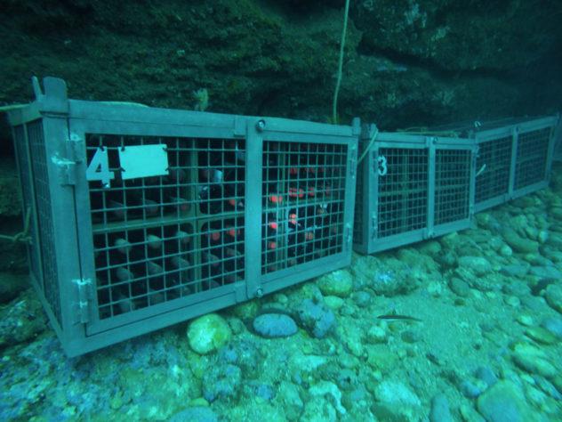 Vino añejado bajo el mar buenosvinos.org